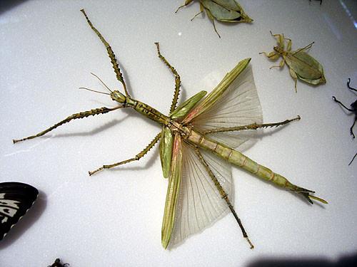 pic-10-plattblog_insect