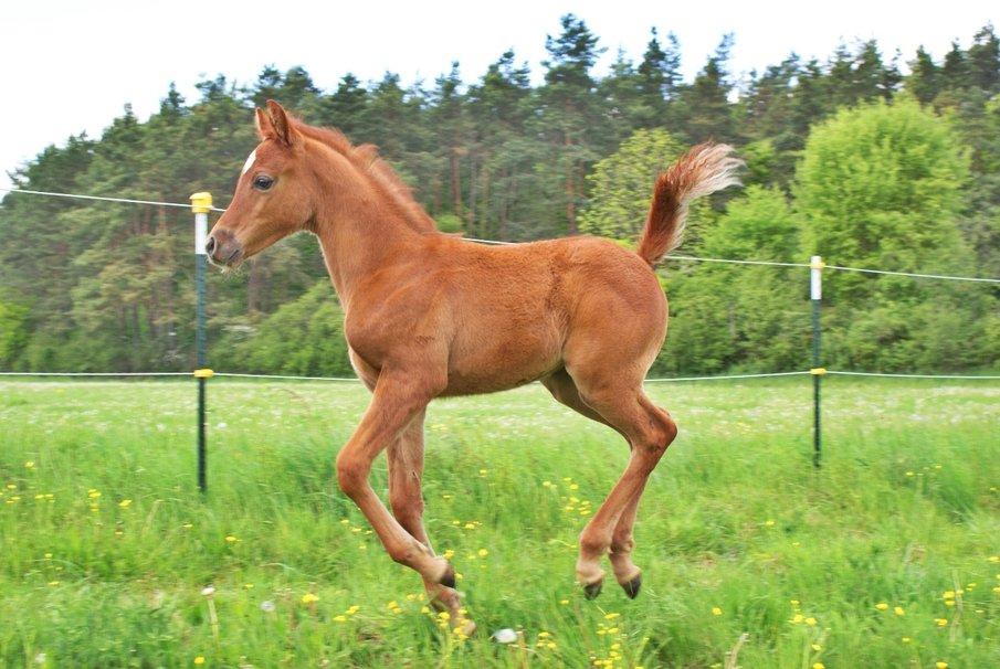454648__brown-foal_p