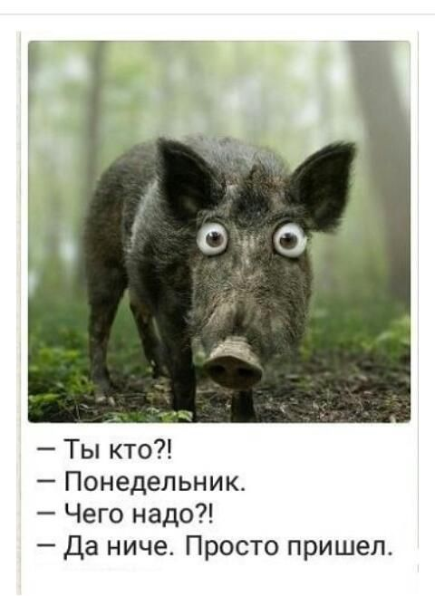 http://www.yaplakal.com/forum2/topic1649257.html