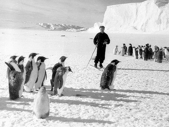 http://22-91.ru/foto-vremen-sovetskogo-soyuza/sovetskijj-poljarnik-i-pingviny-antarktidy-5782.html