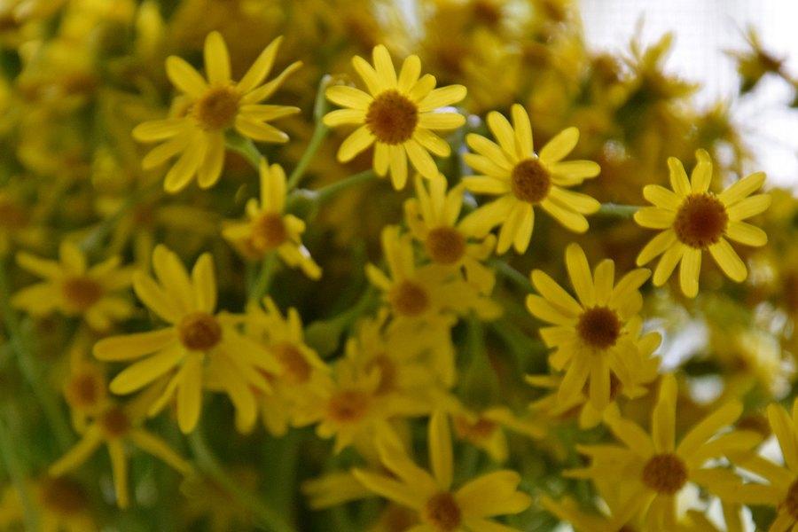Дополнительный жёлтый