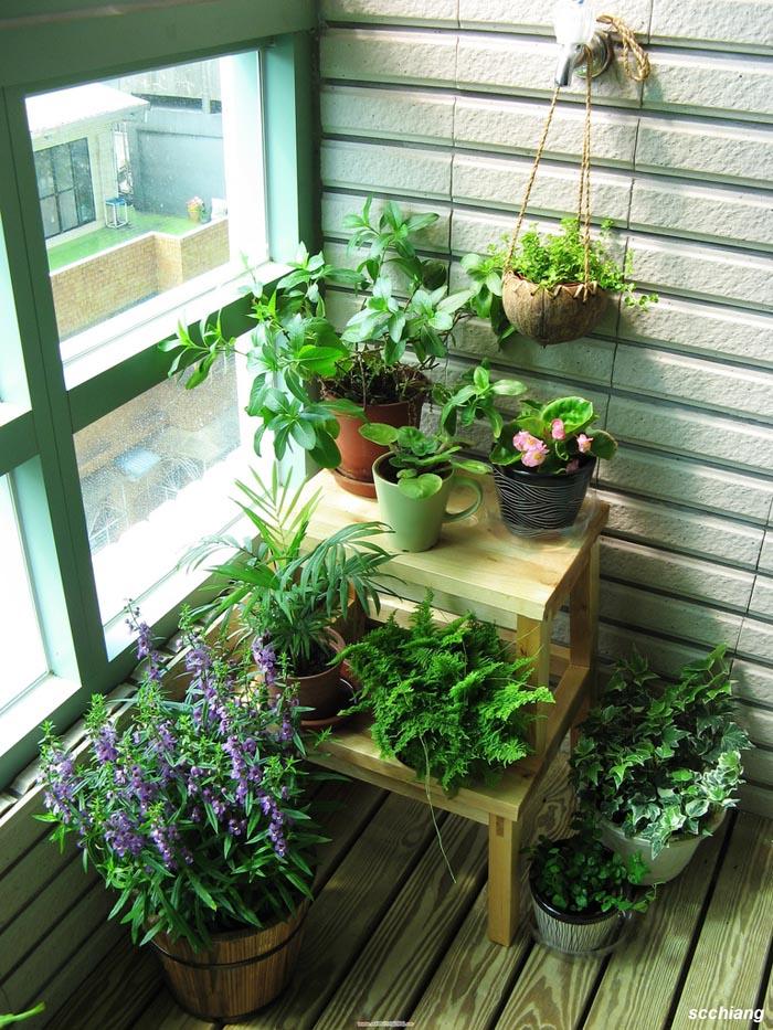 Цветы на застекленном балконе фото