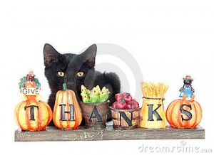 black-kitten-and-thank-you-sign-thumb21055989