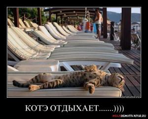 kote-otdyxaet_1