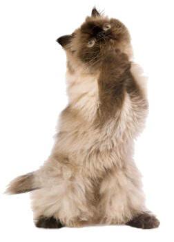 cat_praying_you_will_help