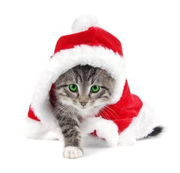 cat12555