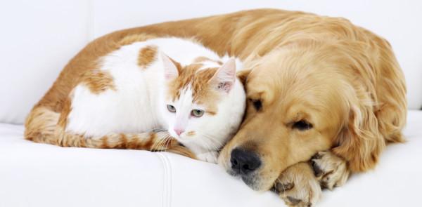 Картинки по запросу курсы ветеринаров в москве