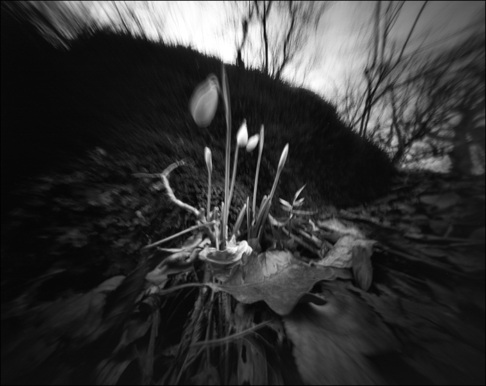 crimea_feb_2015_pinhole_10