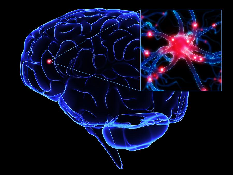 bigstock_Human_Brain