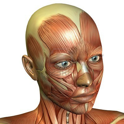 7780887-3d-rendering-of-muscle-of-the-female-face
