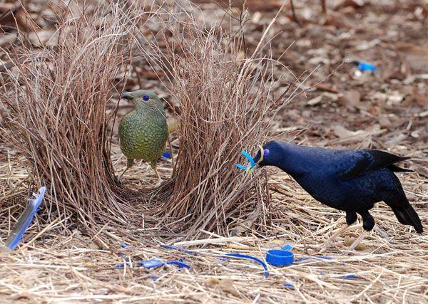 ptica-s-tvorcheskim-vkusom-9-foto_1