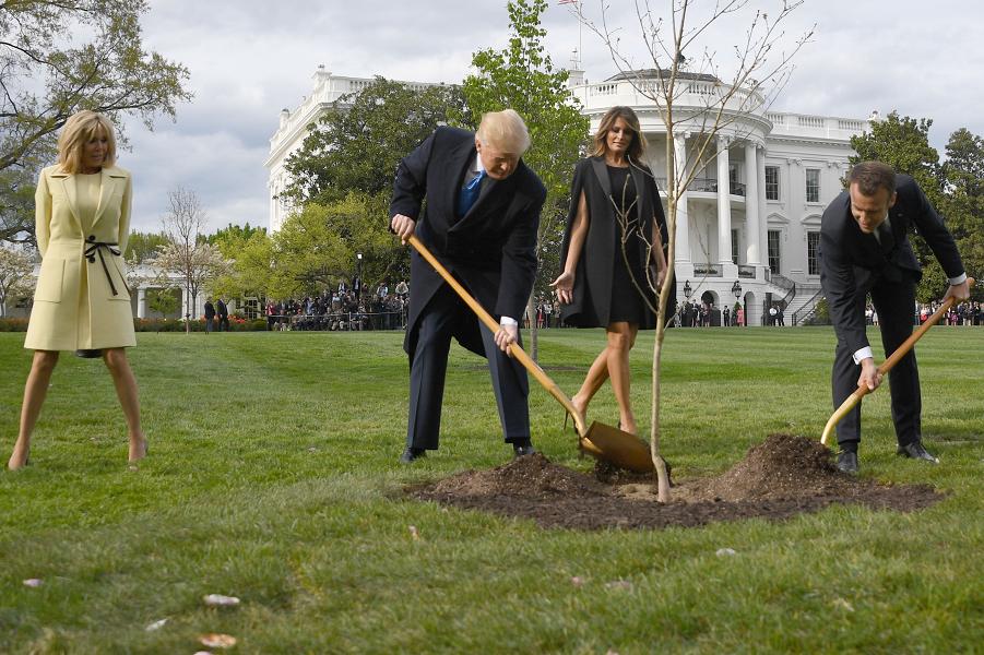 Трамп, Макрон и дуб.png