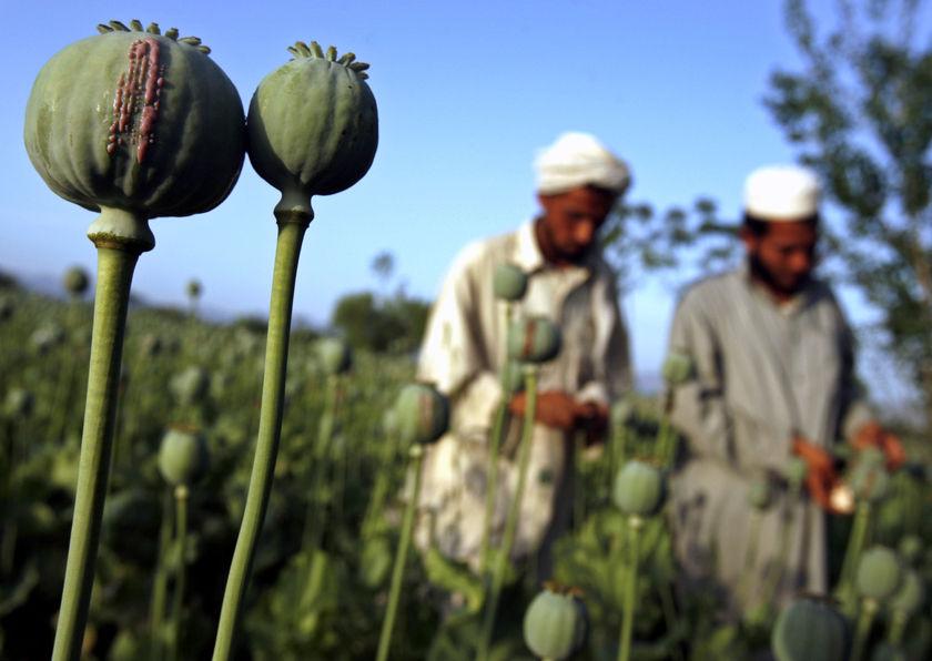 afghan-opium-polytricks