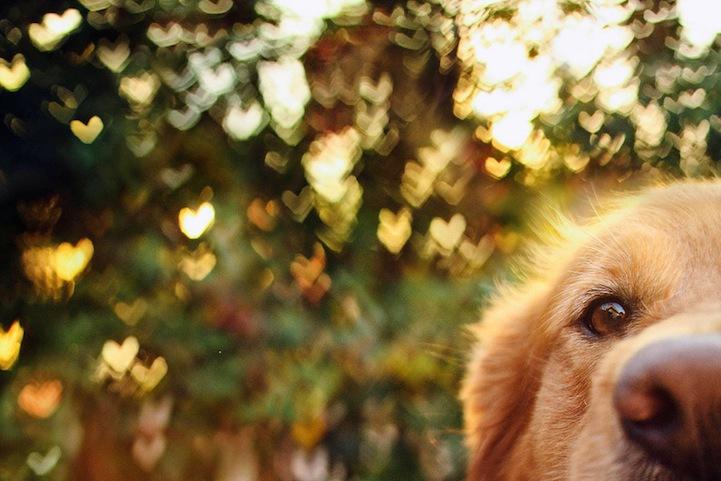 fotograf-Jessica-Trinh-11