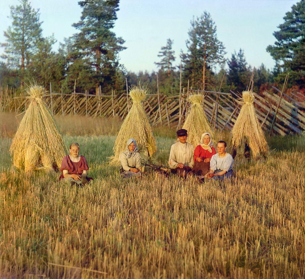 На жнитве. Вологодская губерния, 1909 г