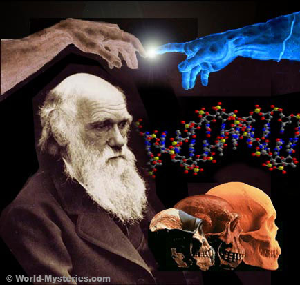 an overview of the role of charles darwin and the research on genetics Human genetics research papers overview the study of biological inheritance as it occurs in humans darwinism in the jungle book - darwinism in the jungle book research papers discuss kipling's novel in light of charles darwin's theories.