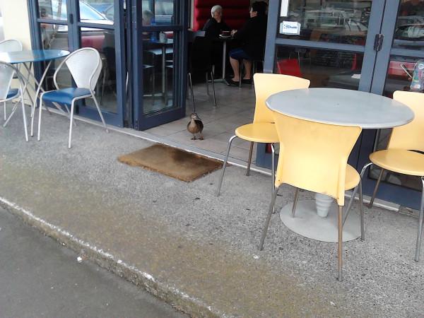 Утки в кафе