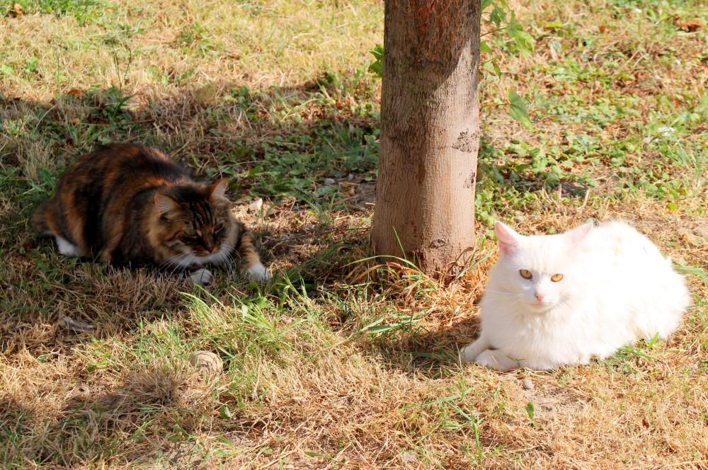 Коты и кошки города Зеленоградска IMG_3232.JPG