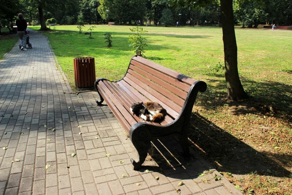 Коты и кошки города Зеленоградска IMG_3239.JPG