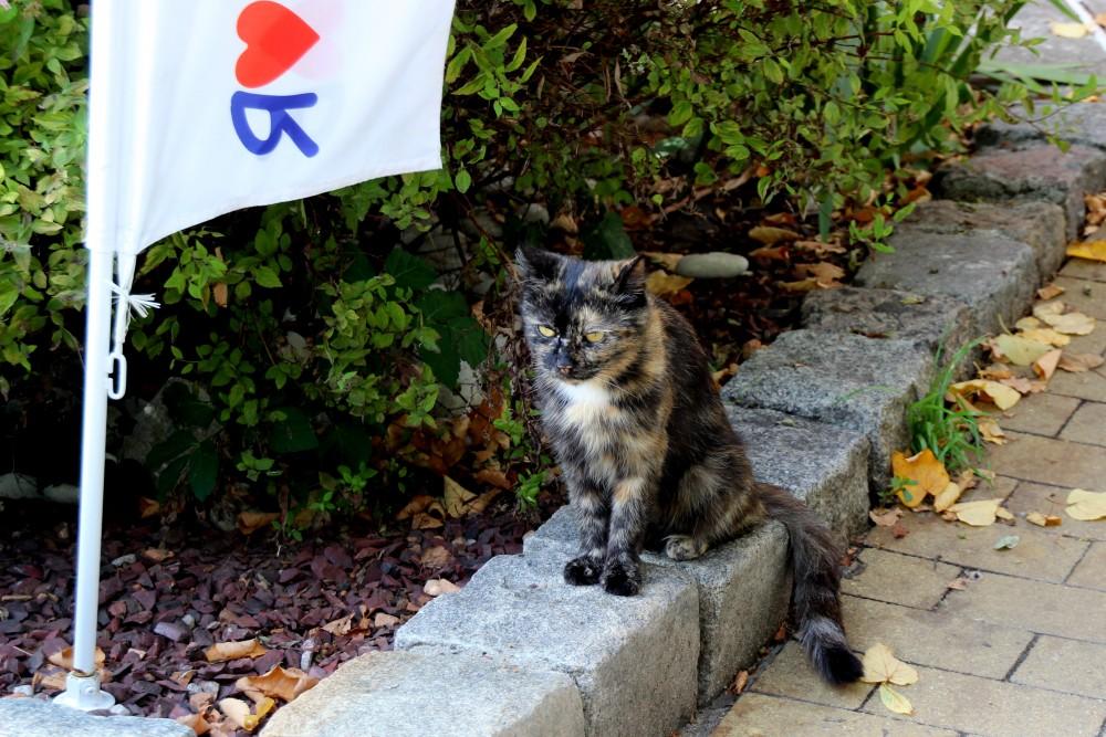 Коты и кошки города Зеленоградска IMG_4309.JPG