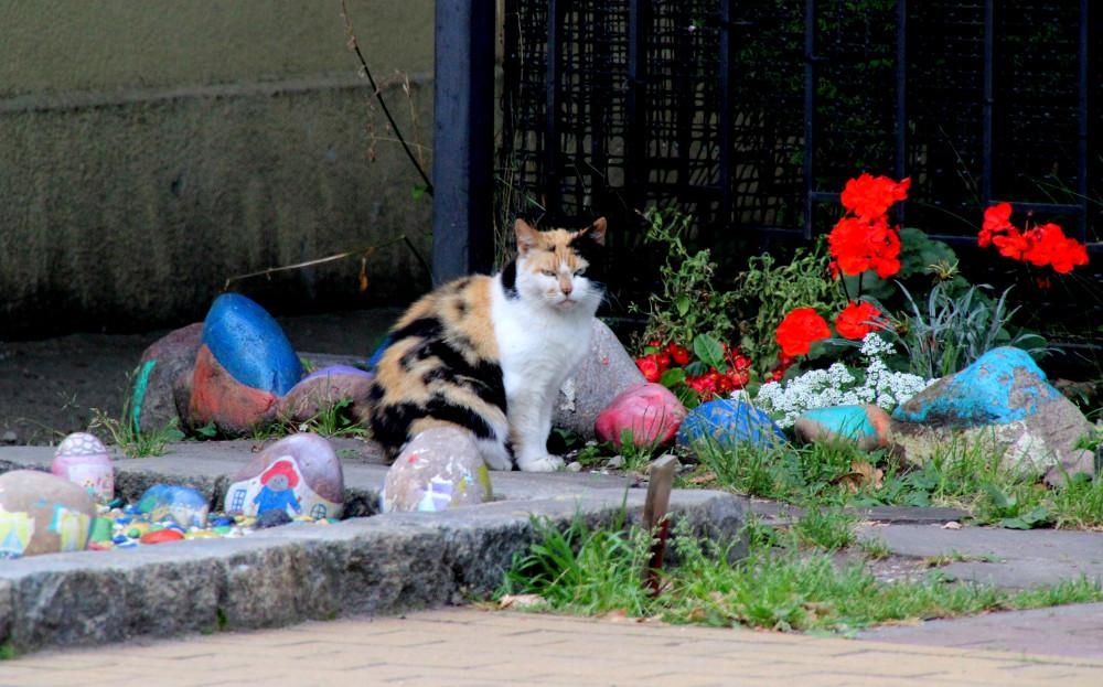 Коты и кошки города Зеленоградска IMG_8708.JPG