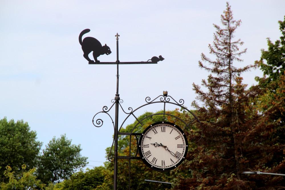Коты и кошки города Зеленоградска IMG_8750.JPG