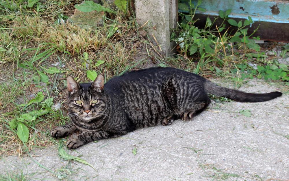 Коты и кошки города Зеленоградска IMG_9294.JPG