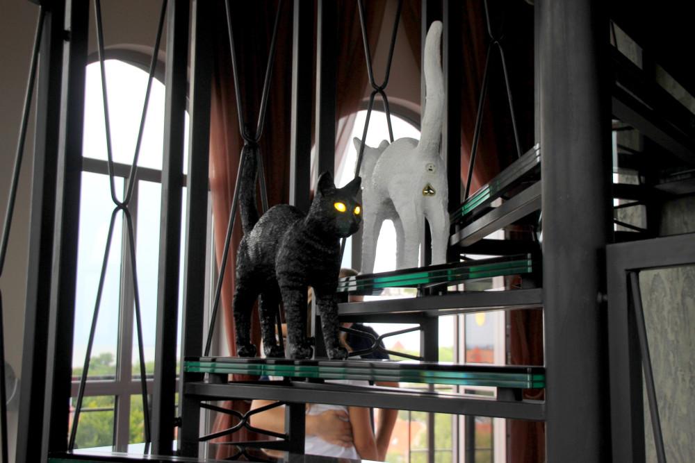 Коты и кошки города Зеленоградска IMG_9443.JPG