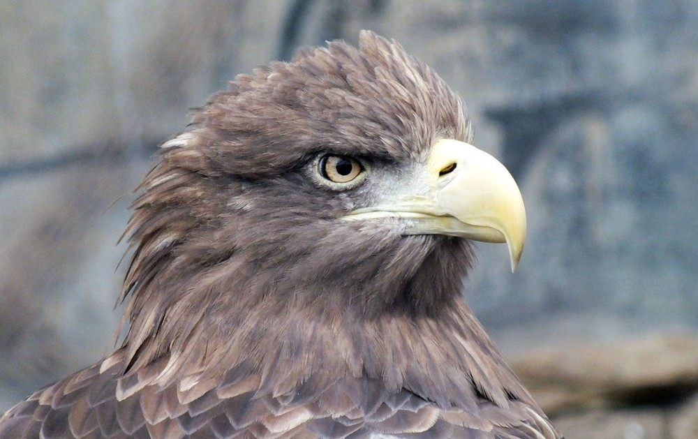 Орёл в профиль