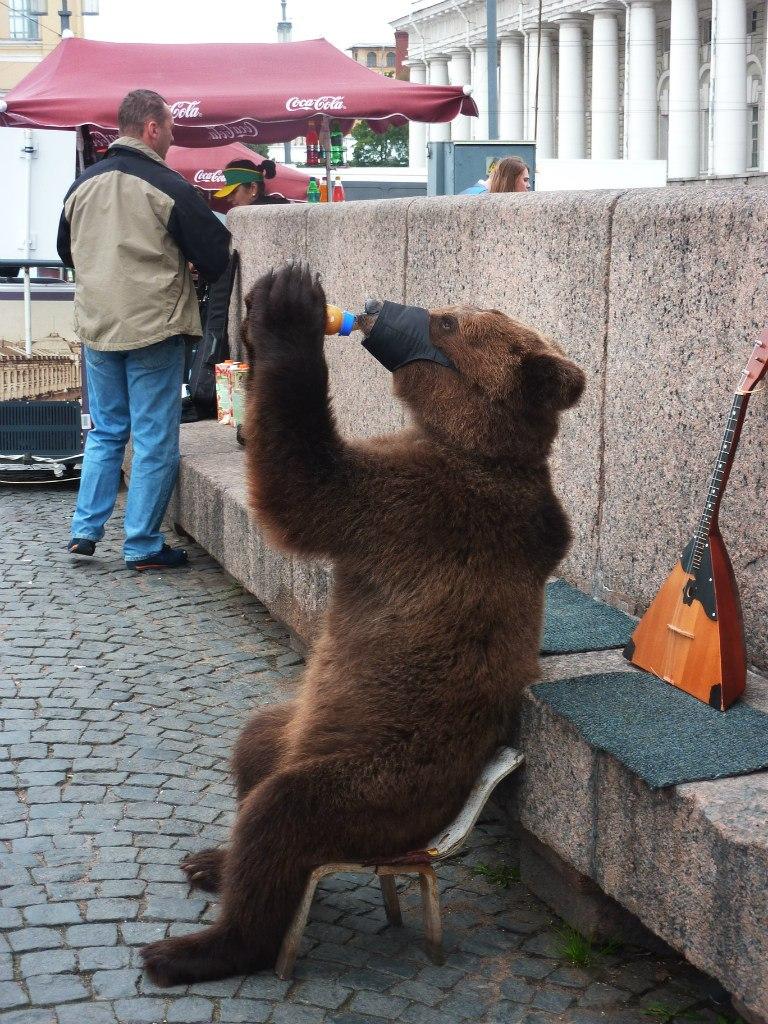 Прикольные картинки медведь россия, для сестры юбилеем