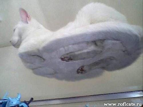 Кот - вид снизу