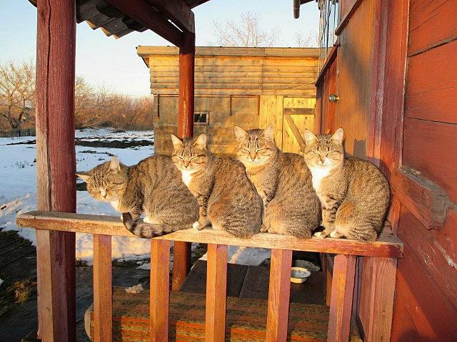 Небольшая подборка котиков