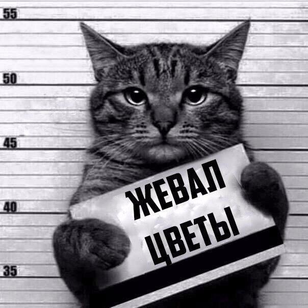 Подборка пятничных котиков