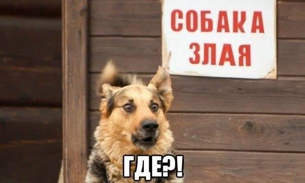 Добрый пес испугался злой собаки