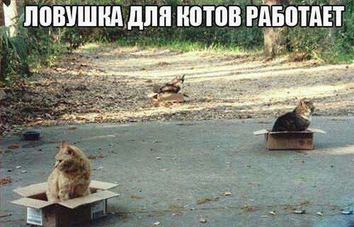 Ловушка для котов
