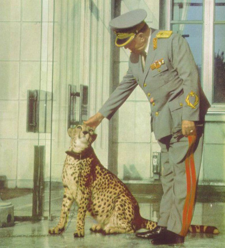 Маршал Броз Тито со своим любимцем
