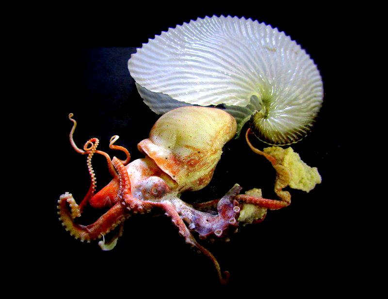 паразиты живущие под кожей человека фото