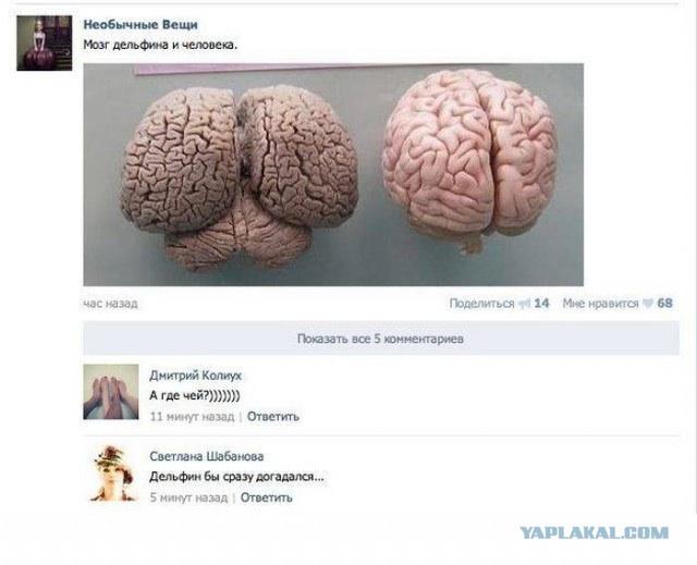 Мозг человека VS мозг дельфина