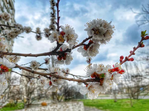 Примета наступившей весны