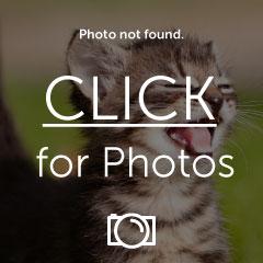 photobucket_no