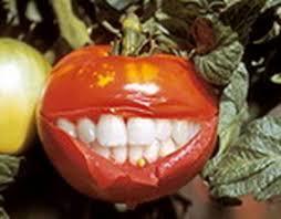 ГМО_Помидоры с зубами