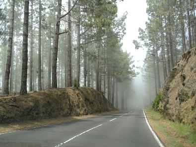Туман001