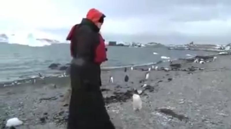 Патриарх Кирилл в окружении пингвинов