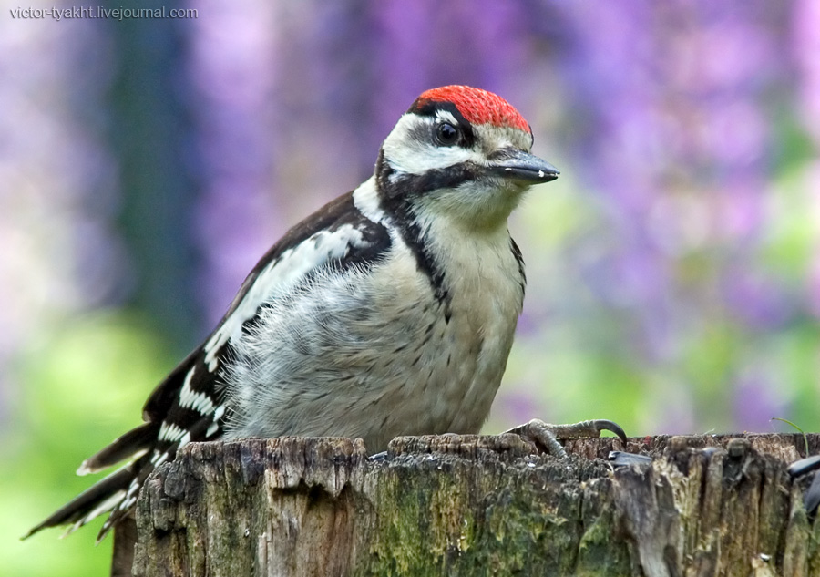 07_Woodpecker_6540_900_LJ