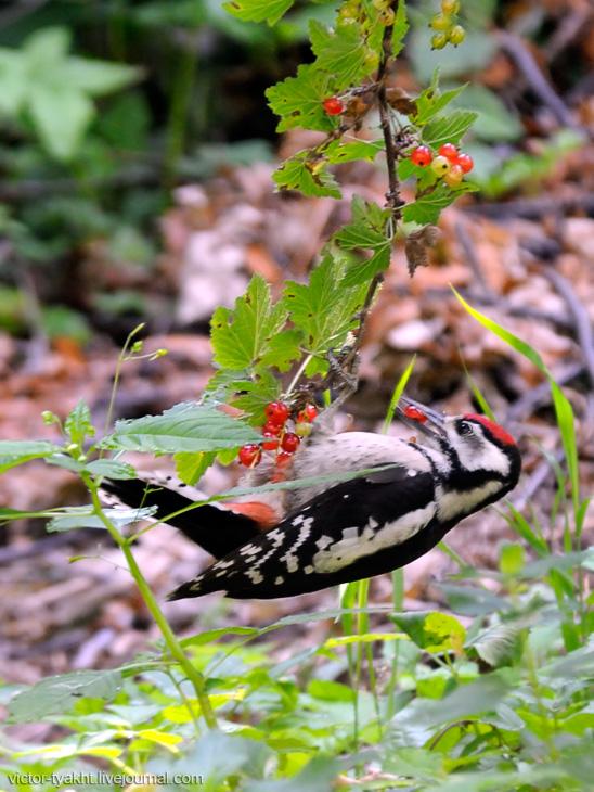 06_Woodpecker_6092_730_LJ