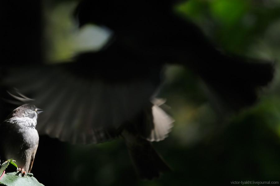 Sparrow_9919_900_LJ
