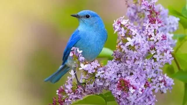 Пение соловья и лесных птиц: активизация всех систем организма.
