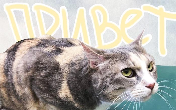Кот испугался похода к ветеринару, заговорил на японском.Видео заставляет поверить в переселение душ