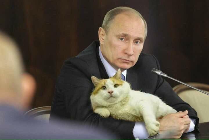 «Кошка бросила котят – это Путин виноват!» Откуда растут ноги этого стишка?