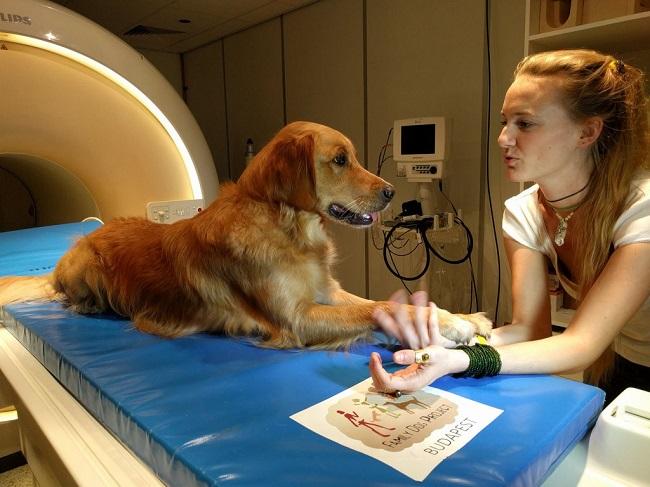 Исследования доказали, что собаки действительно понимают человеческие слова